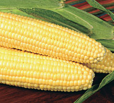 Picture of Sugary-Enhanced Corn Type