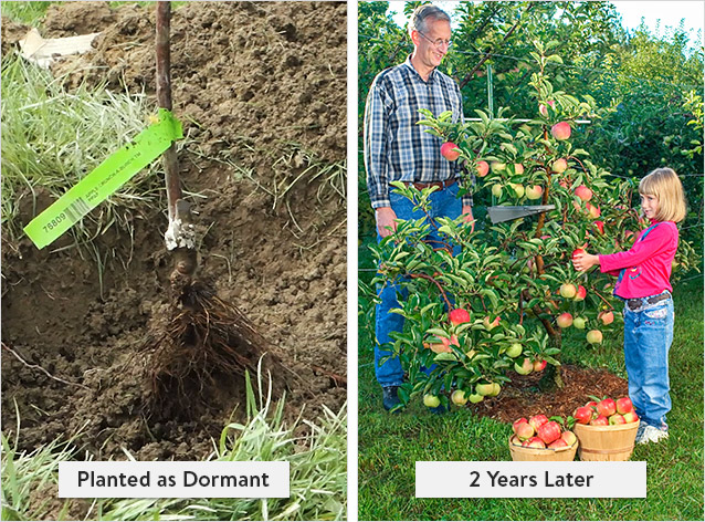 Growth of Dormant Plant