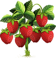 Junebearing Strawberries