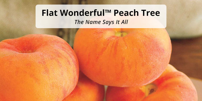 Flat Wonderful<sup>™</sup> Peach Tree