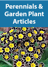 Perennials and Garden Plants Articles