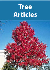Trees Articles