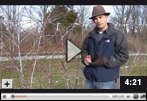 How to Prune Black Raspberry Plants in Late Winter or Early Spring Video
