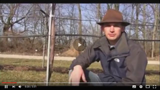 Grape Vine Pruning in Late Winter and Early Spring Video