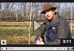 How to Prune a Grape Vine with Two Primary Shoots Video