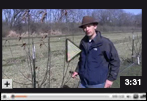 How to Prune an Apple Tree in Late Winter and Early Fall Video