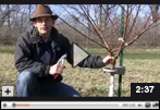 How to Prune a 3rd-year Peach or Stonefruit Tree in Early Spring Video