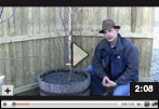 How to Prune Bush Cherry Tree Plants in Early Spring Video