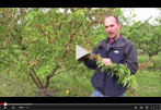 How to Spot Peach Leaf Curl & Grow the Perfect Peach Tree