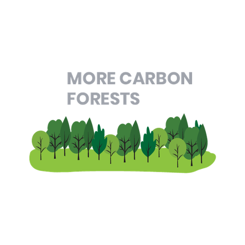 exploring Council land eligible for carbon credits