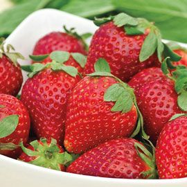 Albion Everbearing Strawberry