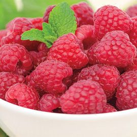 Taylor (Summer Bearer) Raspberry