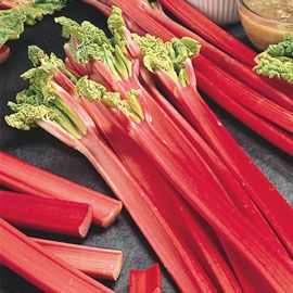 Henry Field's Chipman's Canada Red Rhubarb  - No. 2 root