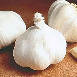 Henry Field's California White Garlic