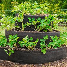 Grow Tub<sup>&reg;</sup> Tiered Strawberry Planter