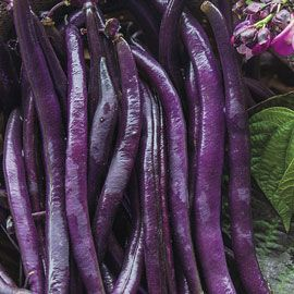 Henry Field's Purple Queen Improved Beans