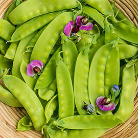 Green Beauty Snow Pea