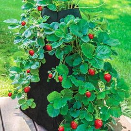 Henry Field's Grow Tub<sup>&reg;</sup> Strawberry Tower&trade;