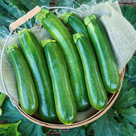 Henry Field's  Tender Gem Improved Hybrid Summer Squash
