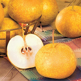 Drippin' Honey™ Reachables® Pear Tree