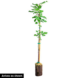 Flat Wonderful™ Reachables® Peach Tree