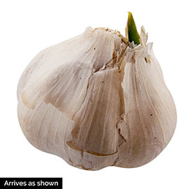 Spanish Roja Garlic