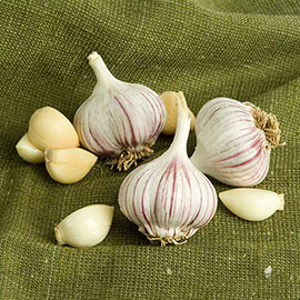 Chesnok Red Garlic