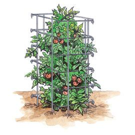 Henry Field's Tomato Cage