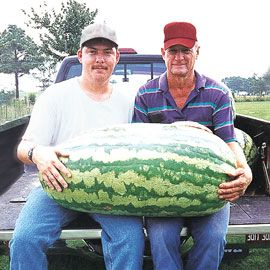 Henry Field's Carolina Cross #183 Watermelon - Pkt.