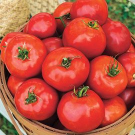 Henry Field's Celebration Hybrid Tomato - Pkt.