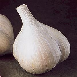 Softneck Walla Walla Early Garlic