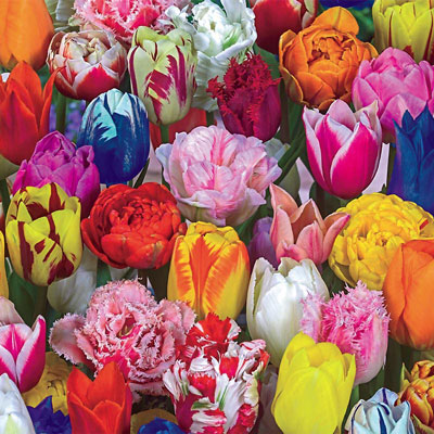 All Spring Tulip Mix