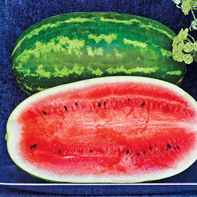 Plantation Pride Hybrid Watermelon