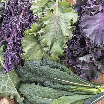 Gurney's<sup>®</sup> Winter Wonderland Kale Mix