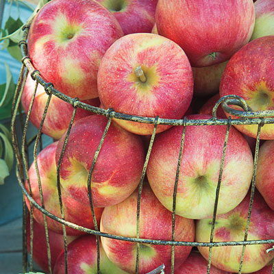 Cripps Pink Lady Apple Tree