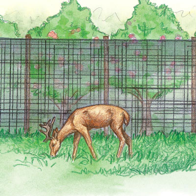 Deer Stop Netting