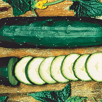 Early Spring Burpless Hybrid Slicing Cucumber