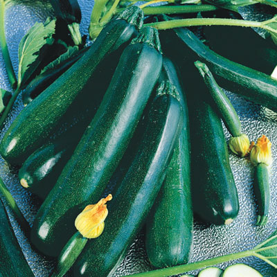 Black Magic Zucchini Summer Squash