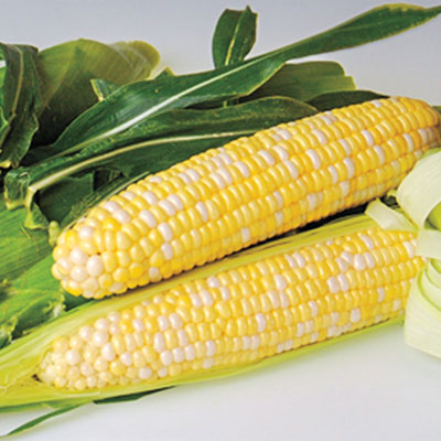 Sweetness (sy) Synergistic Hybrid Corn