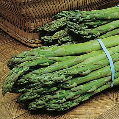 Mary Washington Improved Asparagus