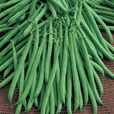 Flavor Sweet Bush Bean