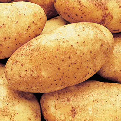 Russet Burbank Potatoes