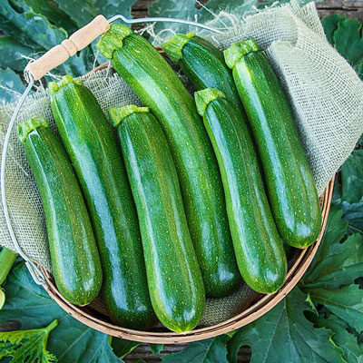 Tender Gem Improved Hybrid Summer Squash
