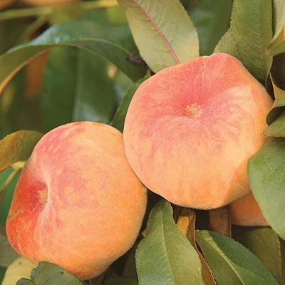 Flat Wonderful™ Reachables™ Peach Tree