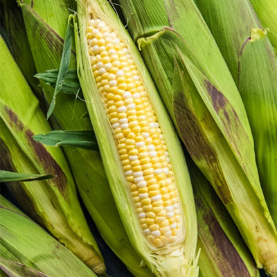 Picasso (sy) Synergistic Hybrids Corn