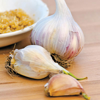 Hardneck Music Garlic