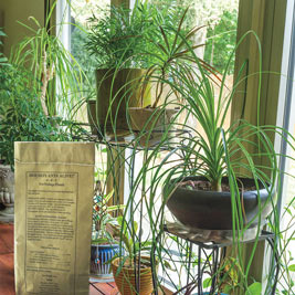Houseplants Alive!™ for Flowers