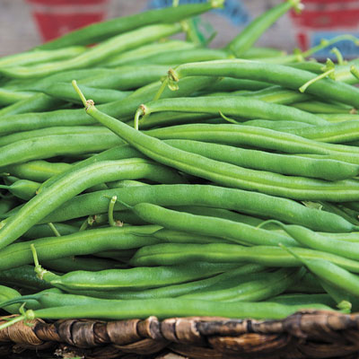 McCaslan Pole Bean