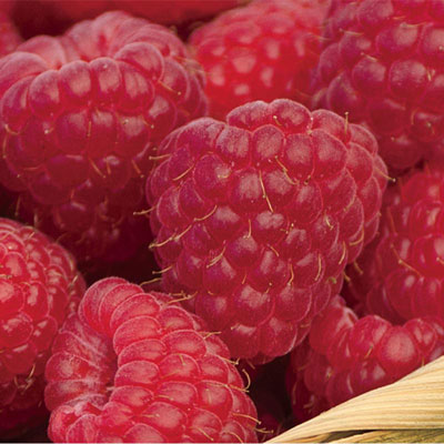 Sweet Repeat<sup>&trade;</sup> Raspberry