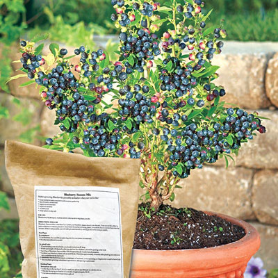 Gurney's<sup>&reg;</sup> Blueberry Success Mix